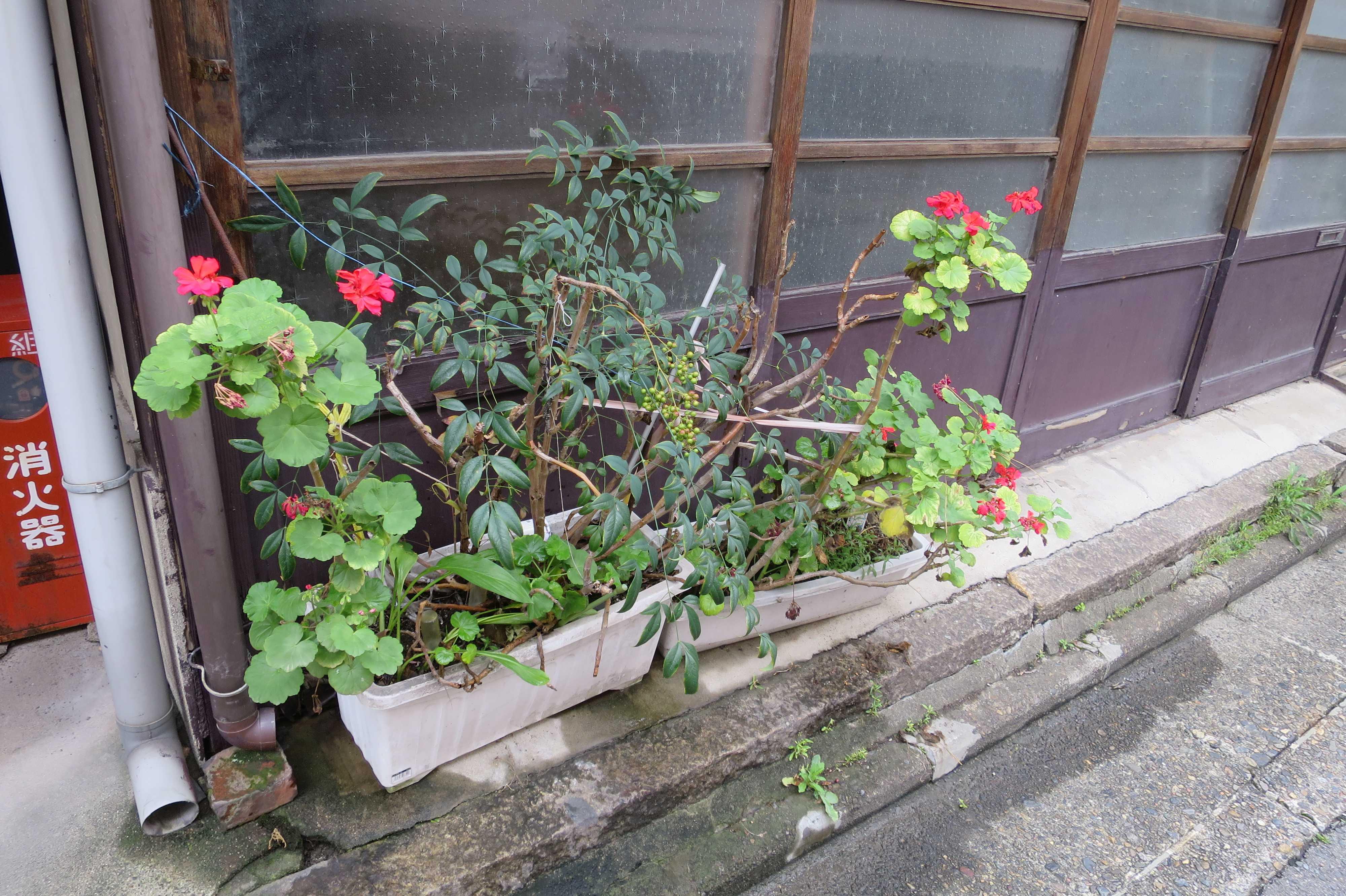 京都 - プランターの赤いお花