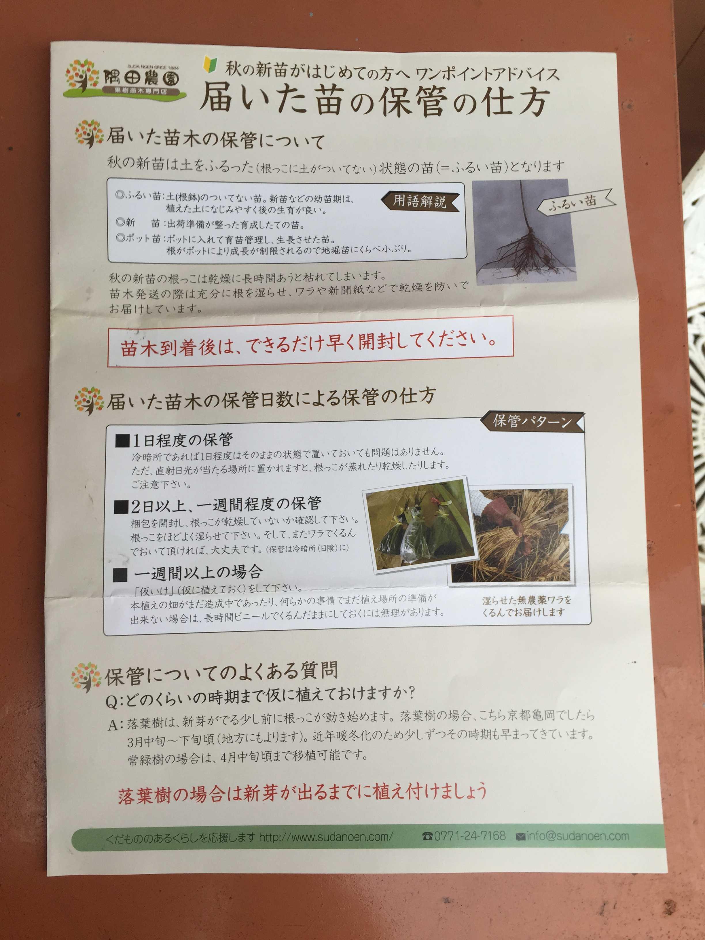 禅寺丸: 届いた苗の保管の仕方