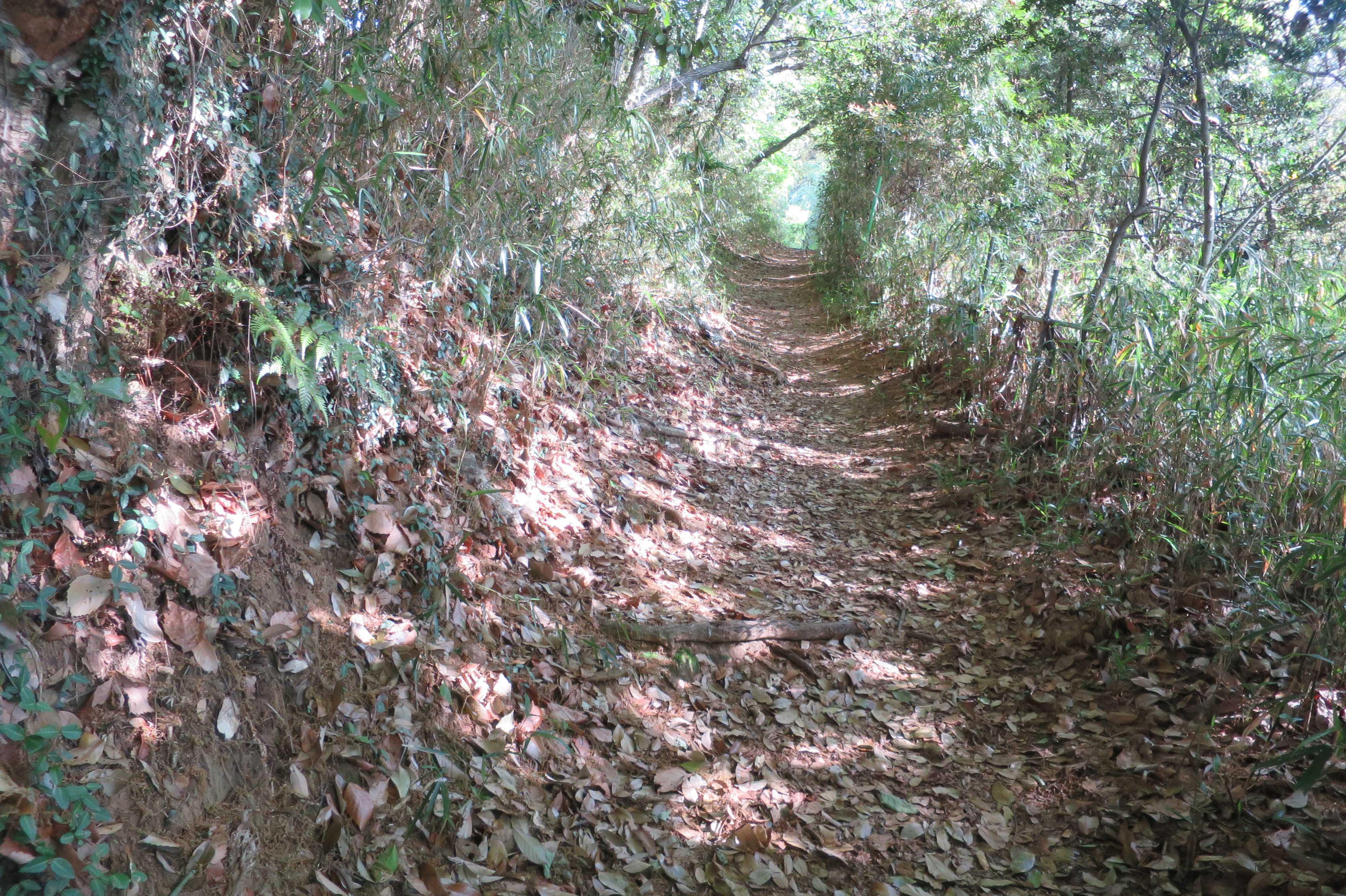 王禅寺ふるさと公園に入る道