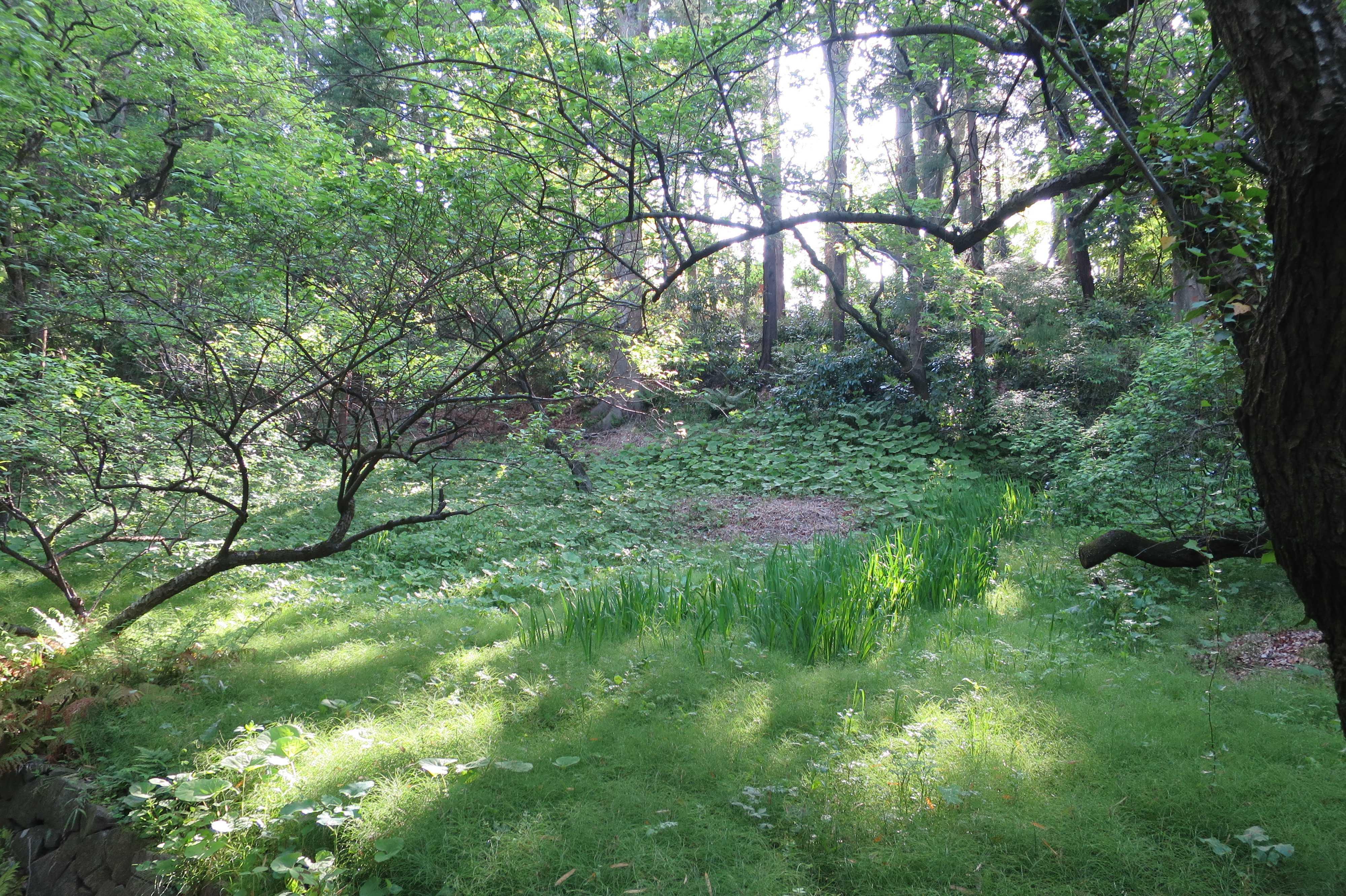 王禅寺境内の森