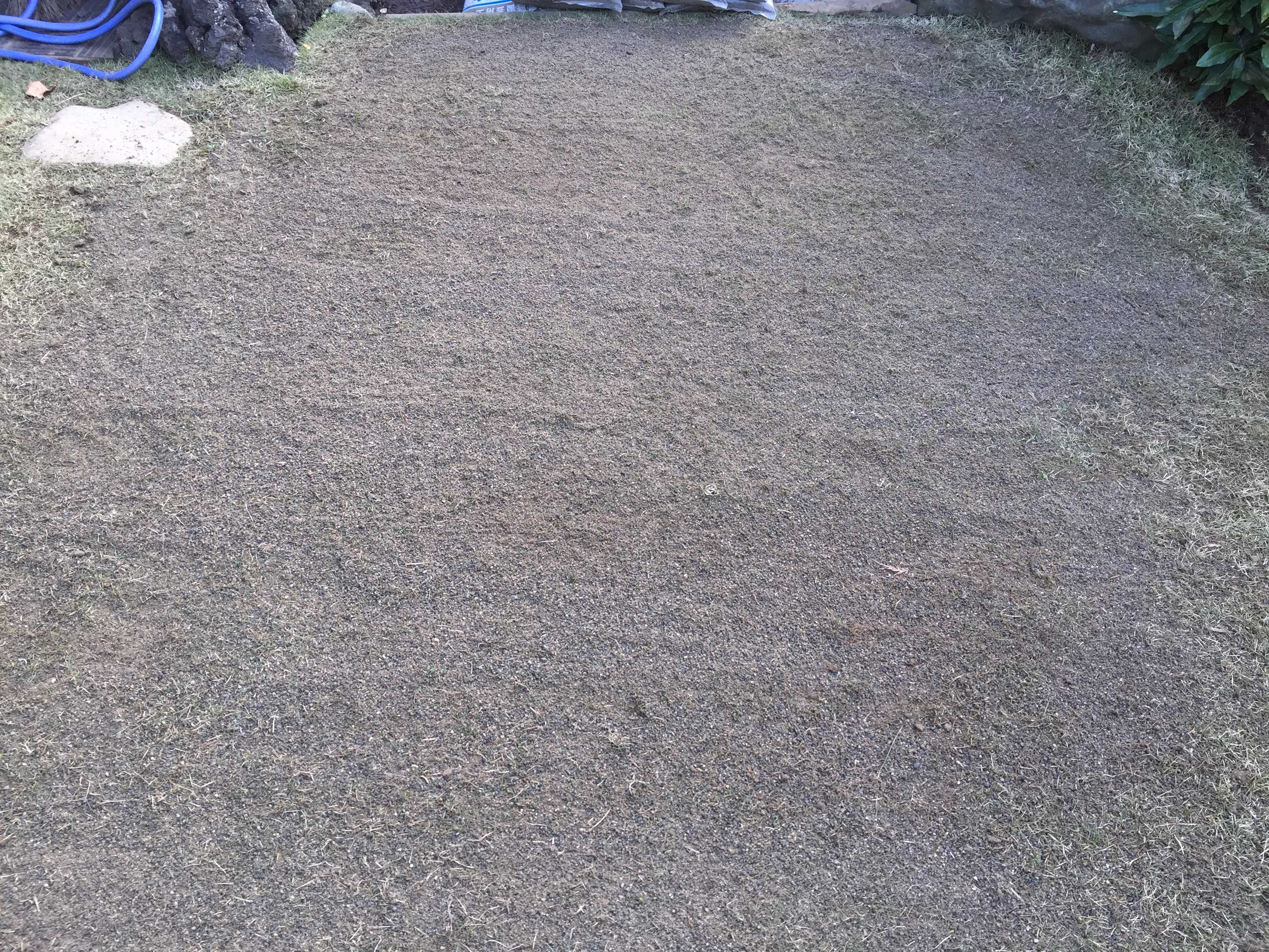TM9 - 貼り付け後 5ヶ月。目砂を入れた芝生・TM9(ティーエムナイン)