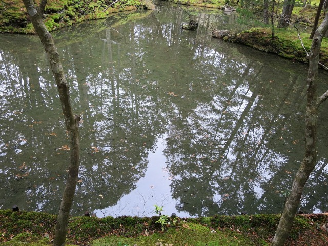 苔寺(西芳寺)の池面