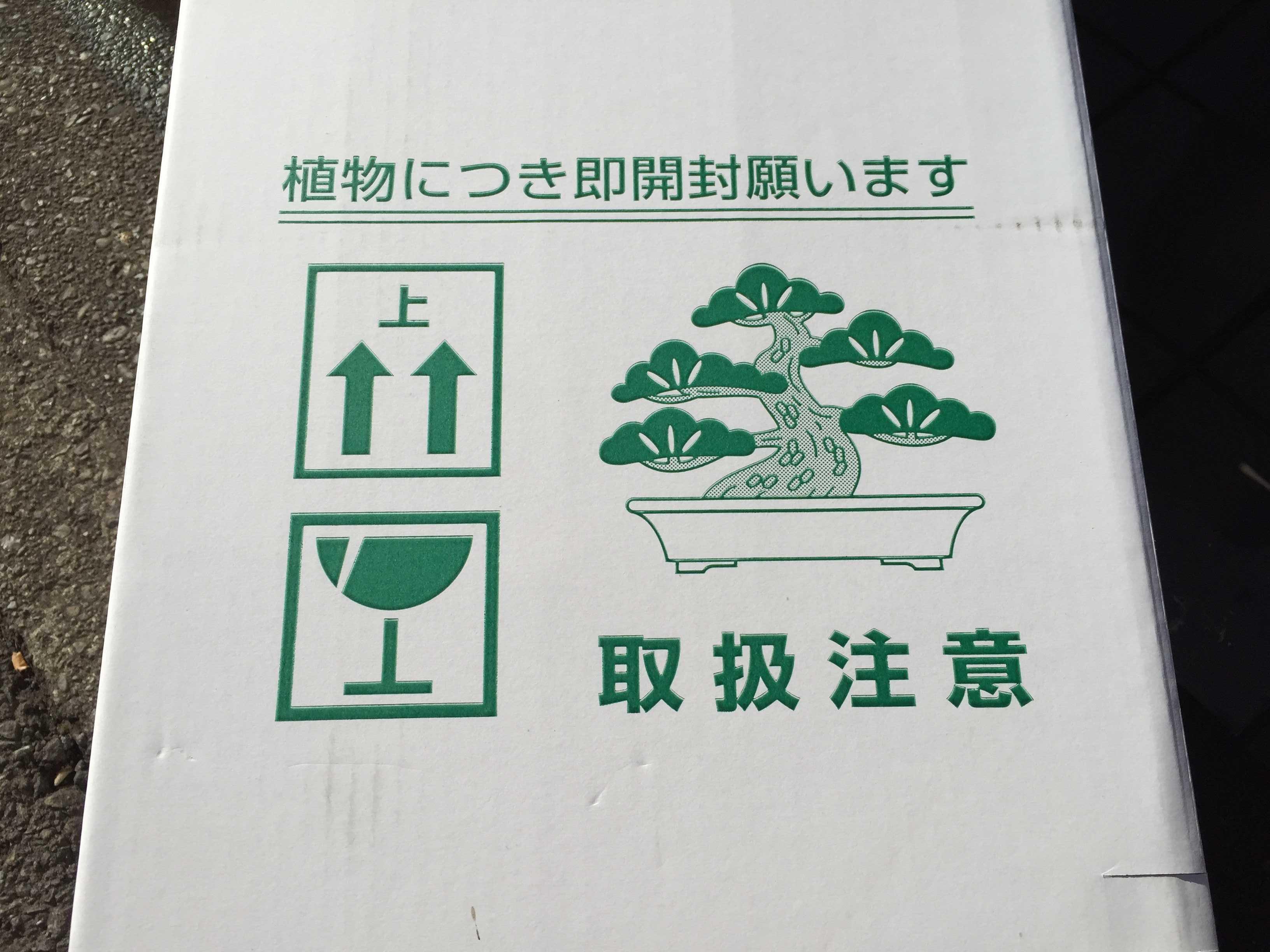 植物用の白い段ボール