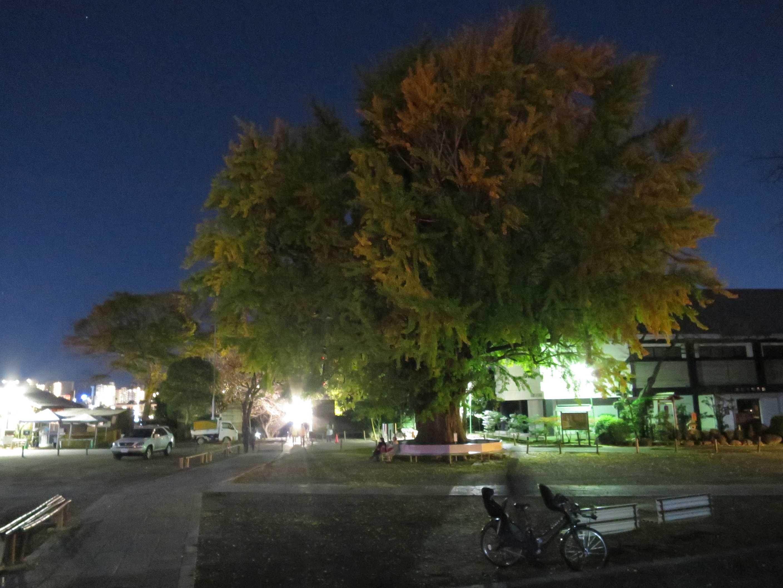 夜の遊行寺境内