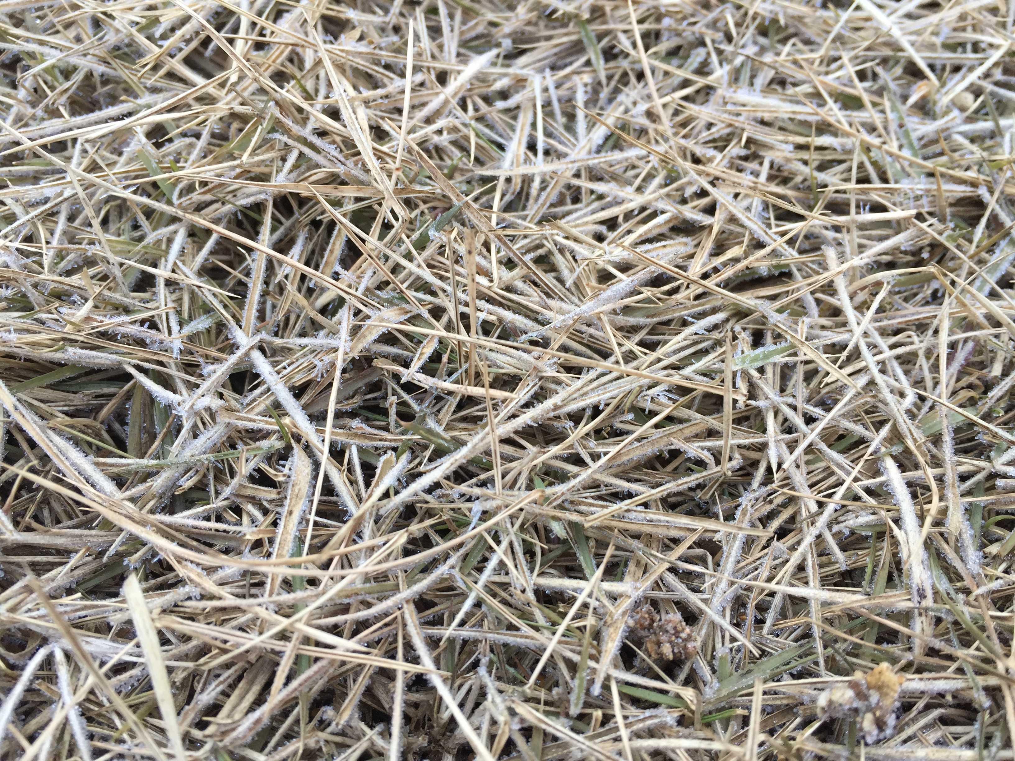1月初旬のTM9の芝生の様子