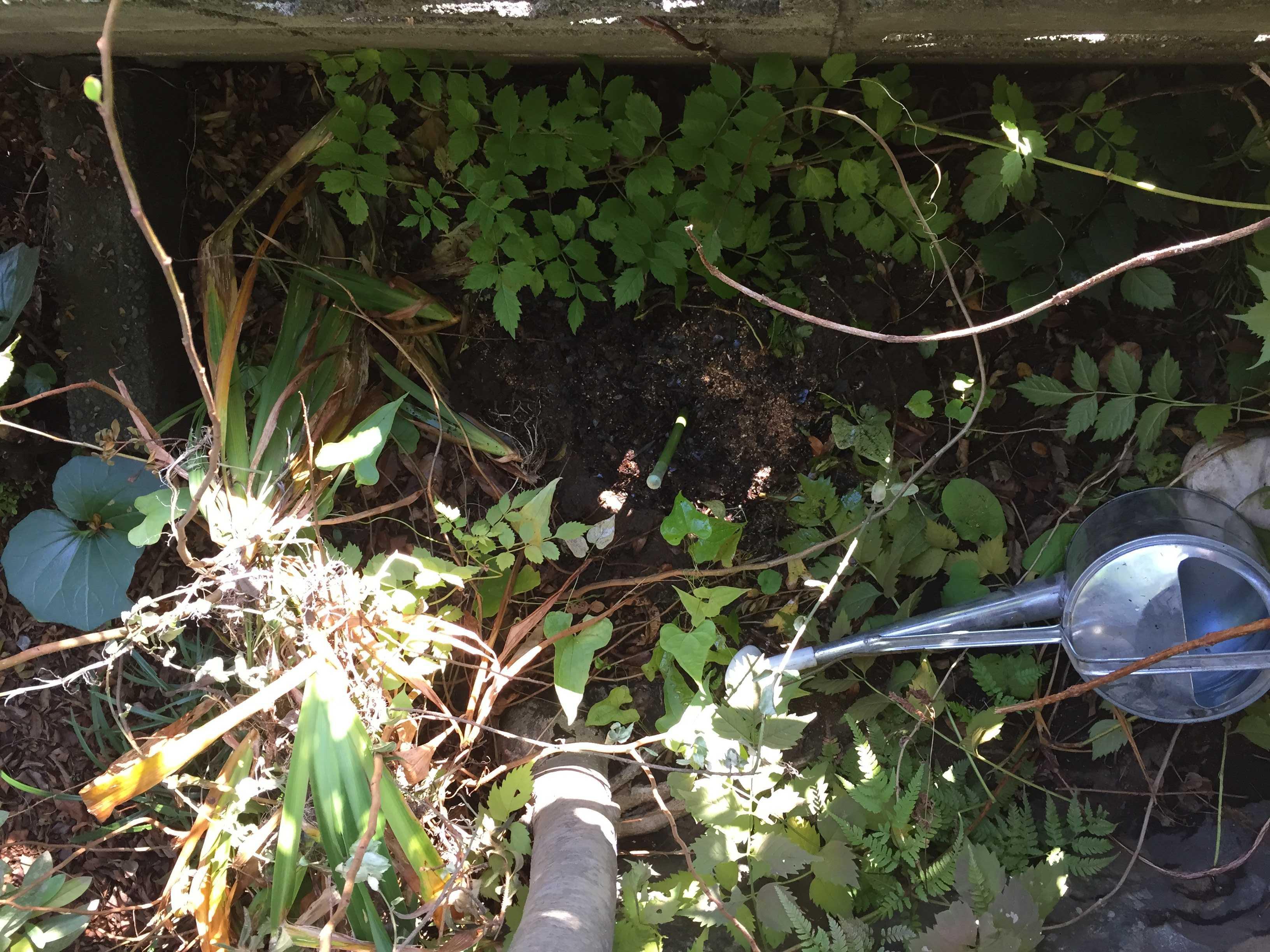 ブロックの裏側(下) - やまゆりの球根の植え付け