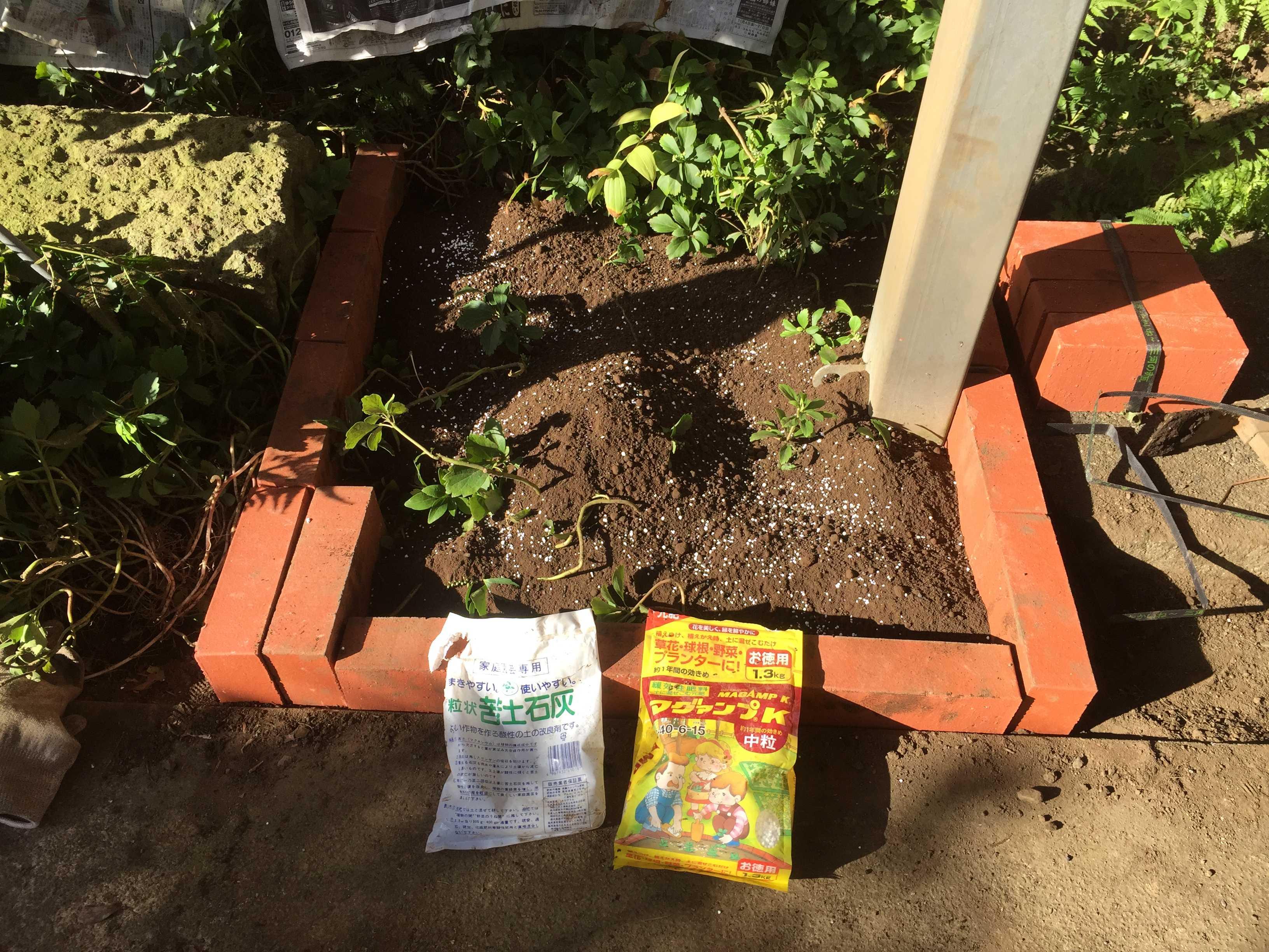 ヤマユリの球根植え付け - マグァンプ + 苦土石灰