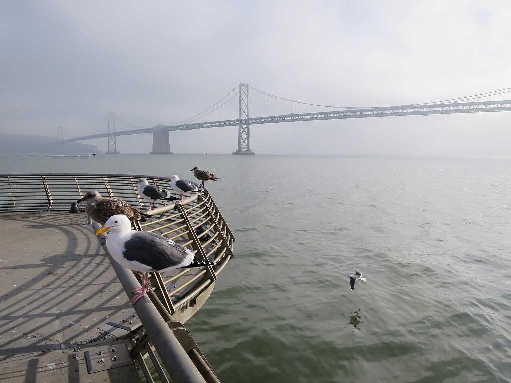 サンフランシスコ湾のカモメ