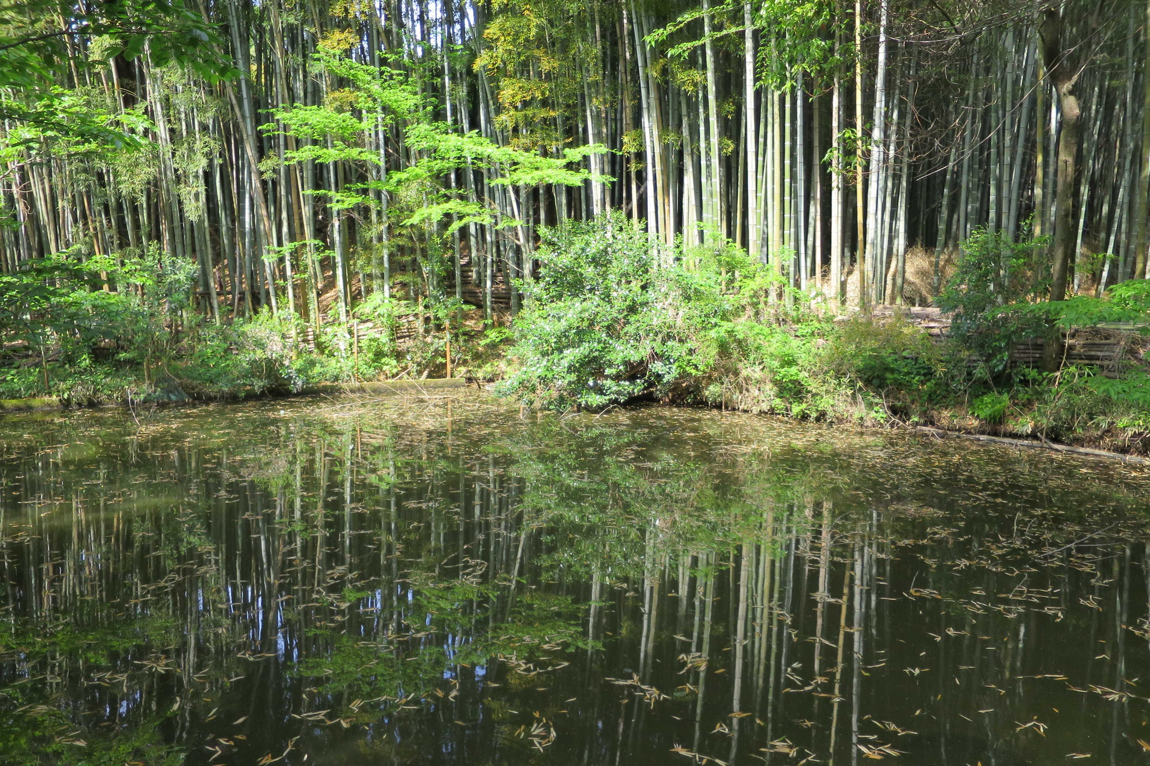 王禅寺境内の池