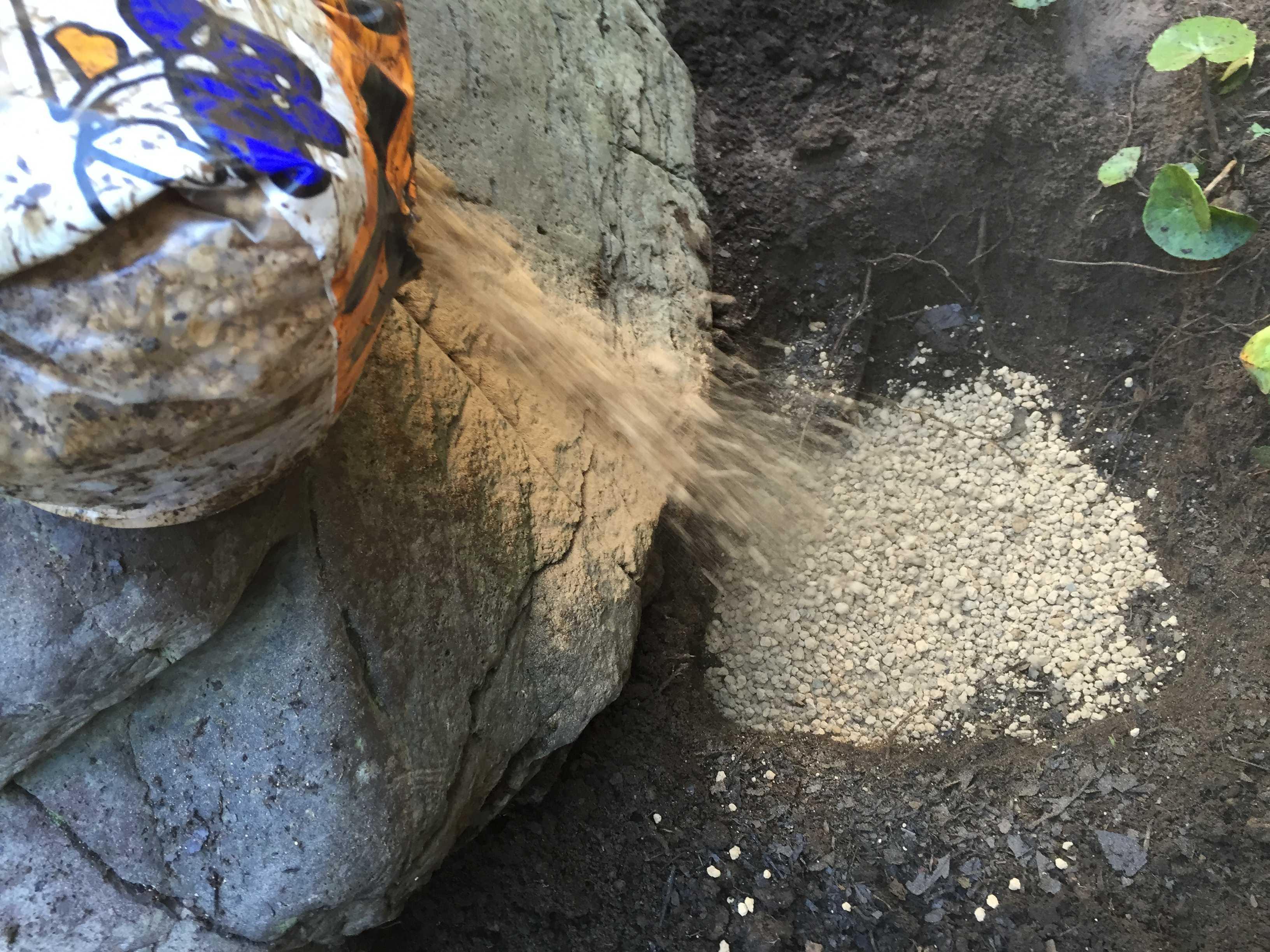 サルスベリ夏祭り用の赤玉土