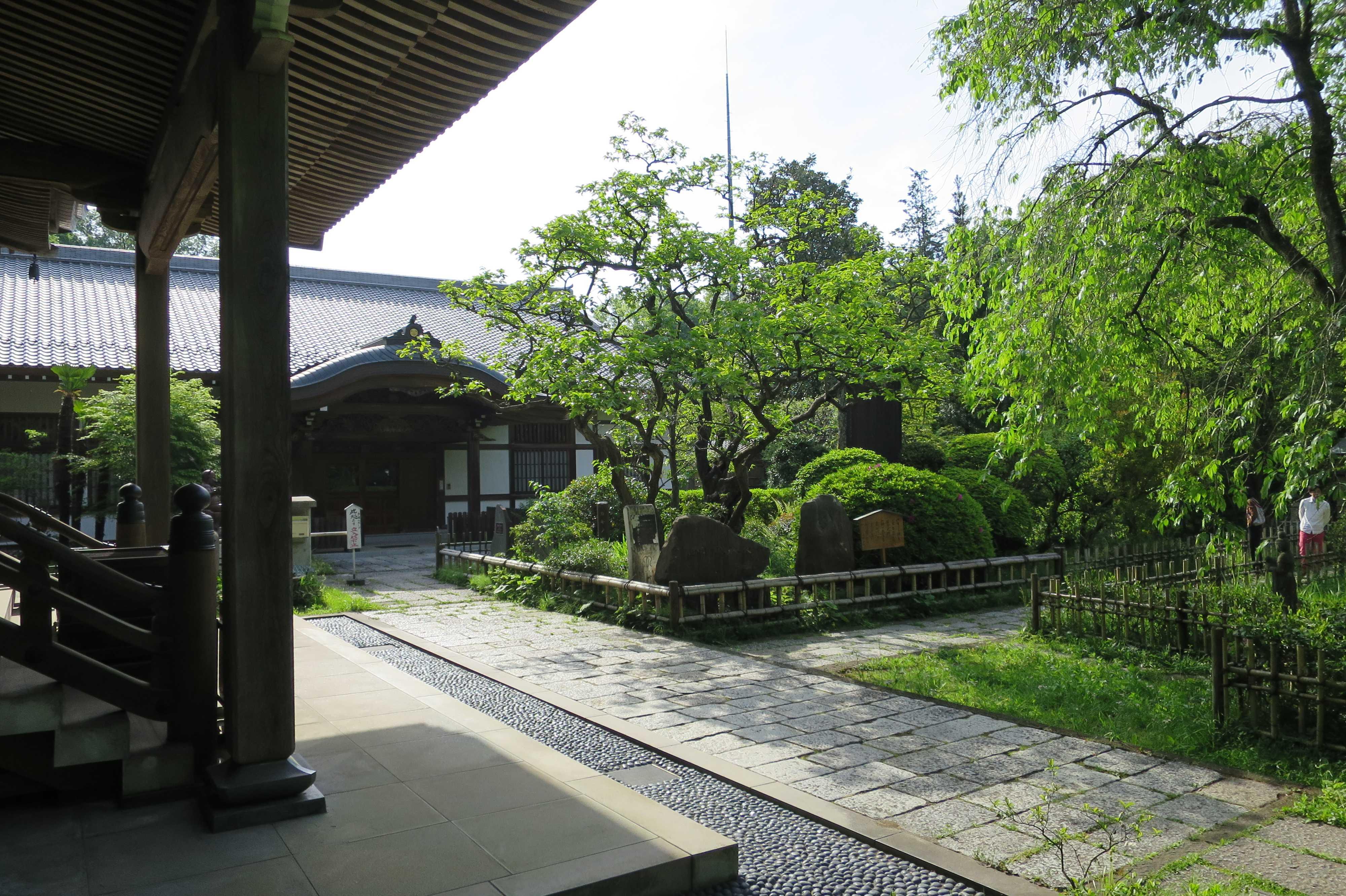 日本最古の甘柿「禅寺丸柿(ぜんじまるがき)」の原木