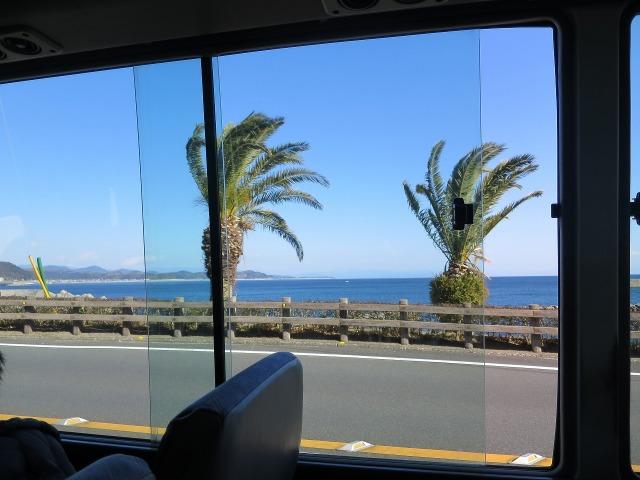バスの車窓 - 高知の椰子の木