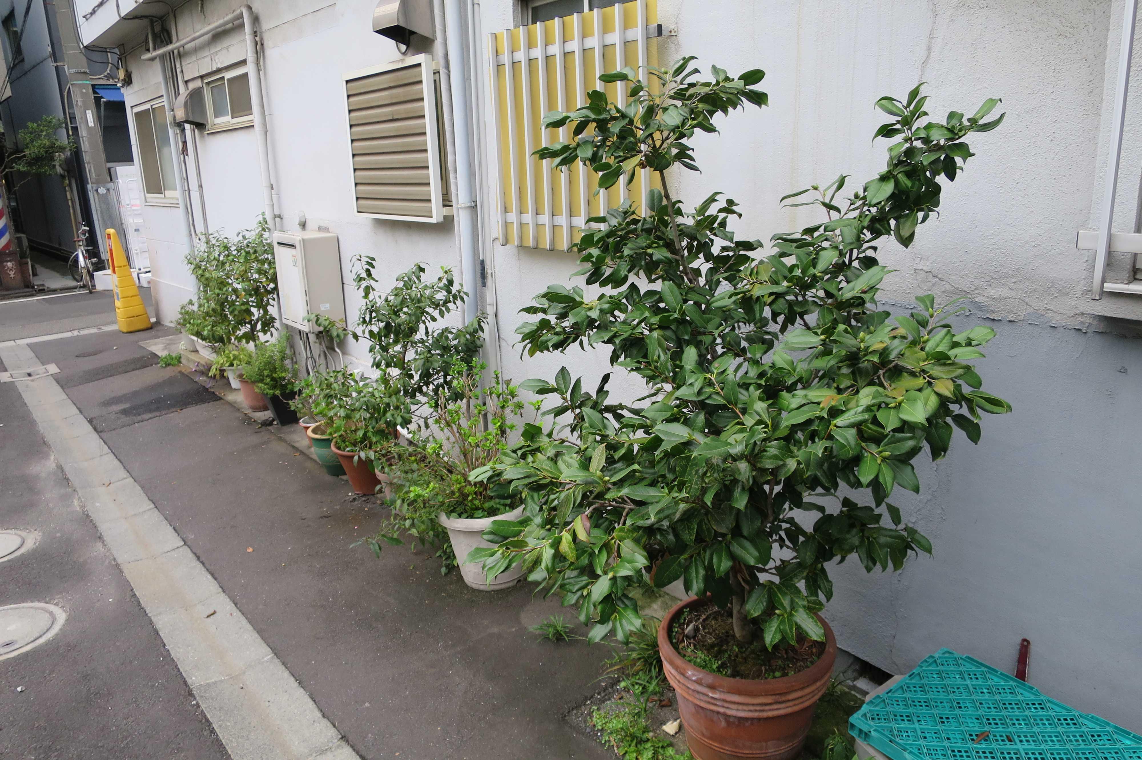 築地エリア - 植木鉢並ぶ築地の路地