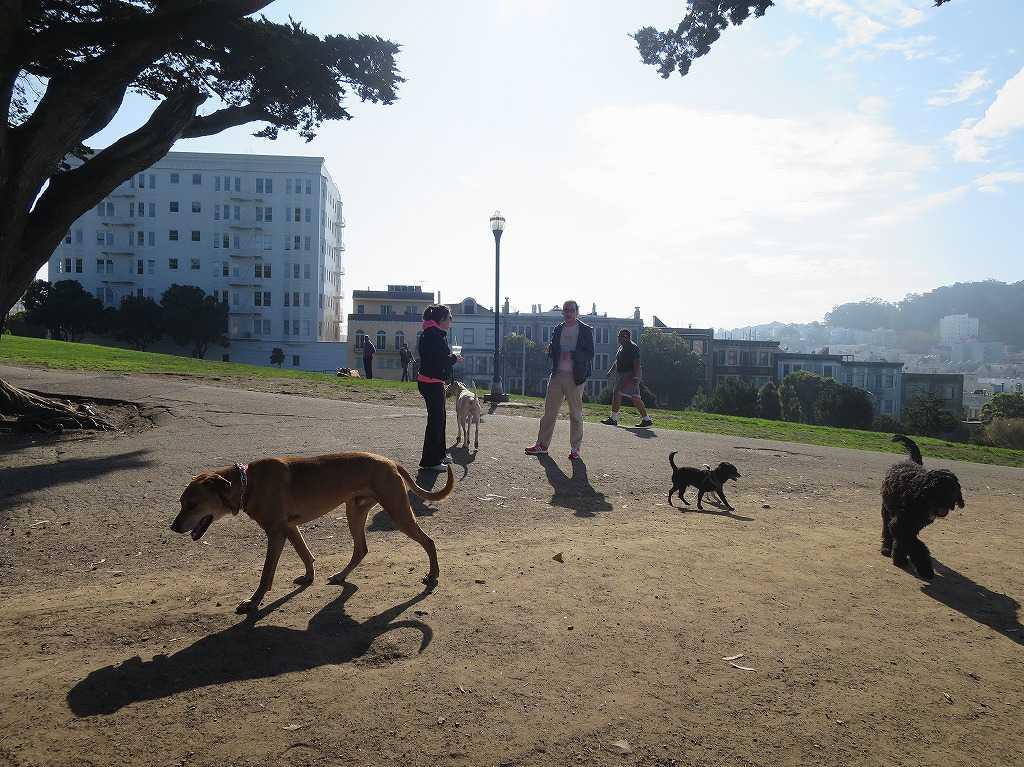 サンフランシスコ - 犬