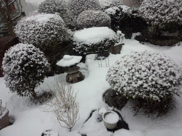雪で真っ白な庭