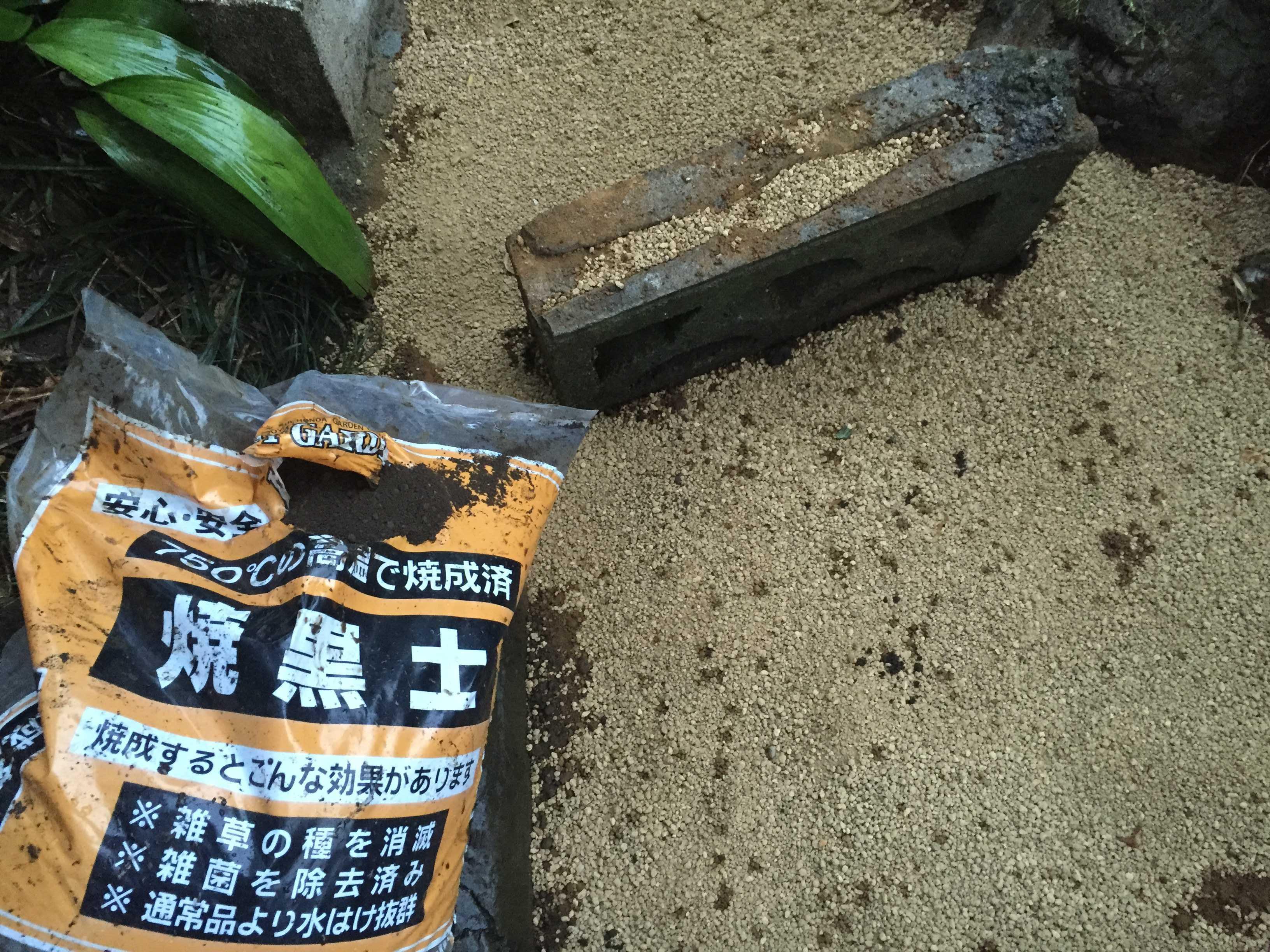 ヤマユリの鱗片定植 - 焼黒土