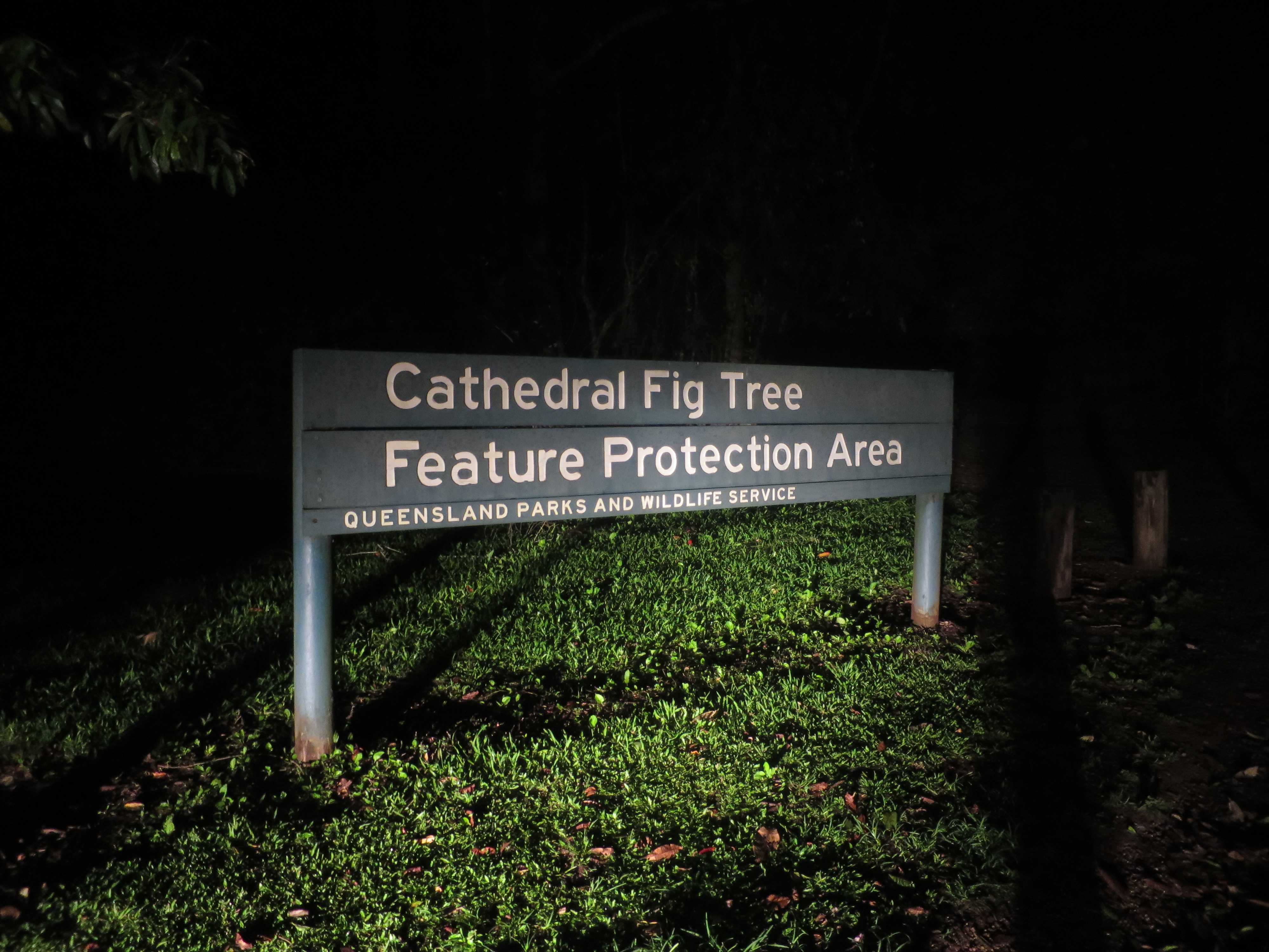 Cathedral Fig Tree(聖堂の樹)の看板