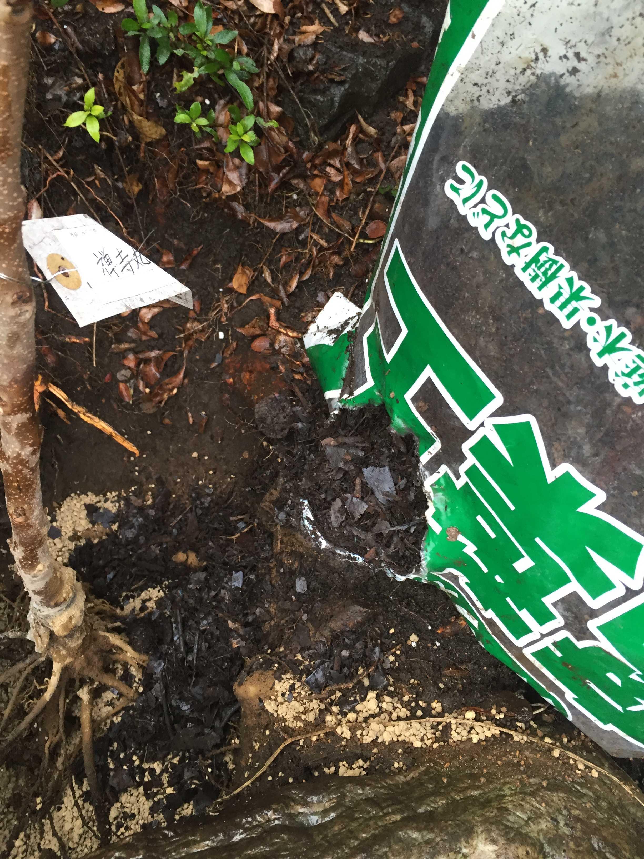 禅寺丸柿の植え穴 - 腐葉土
