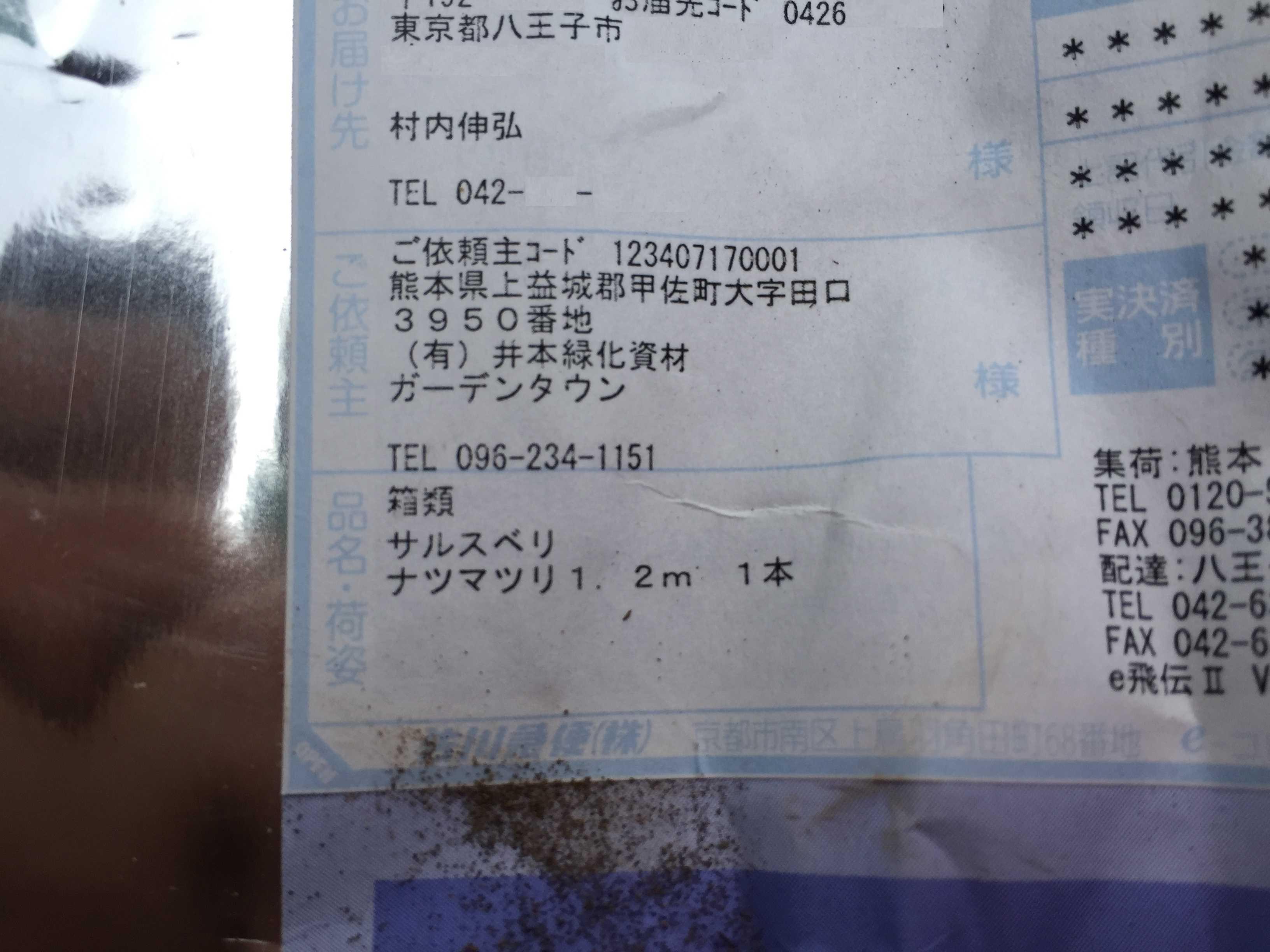 サルスベリ ナツマツリ 1.2m 1本