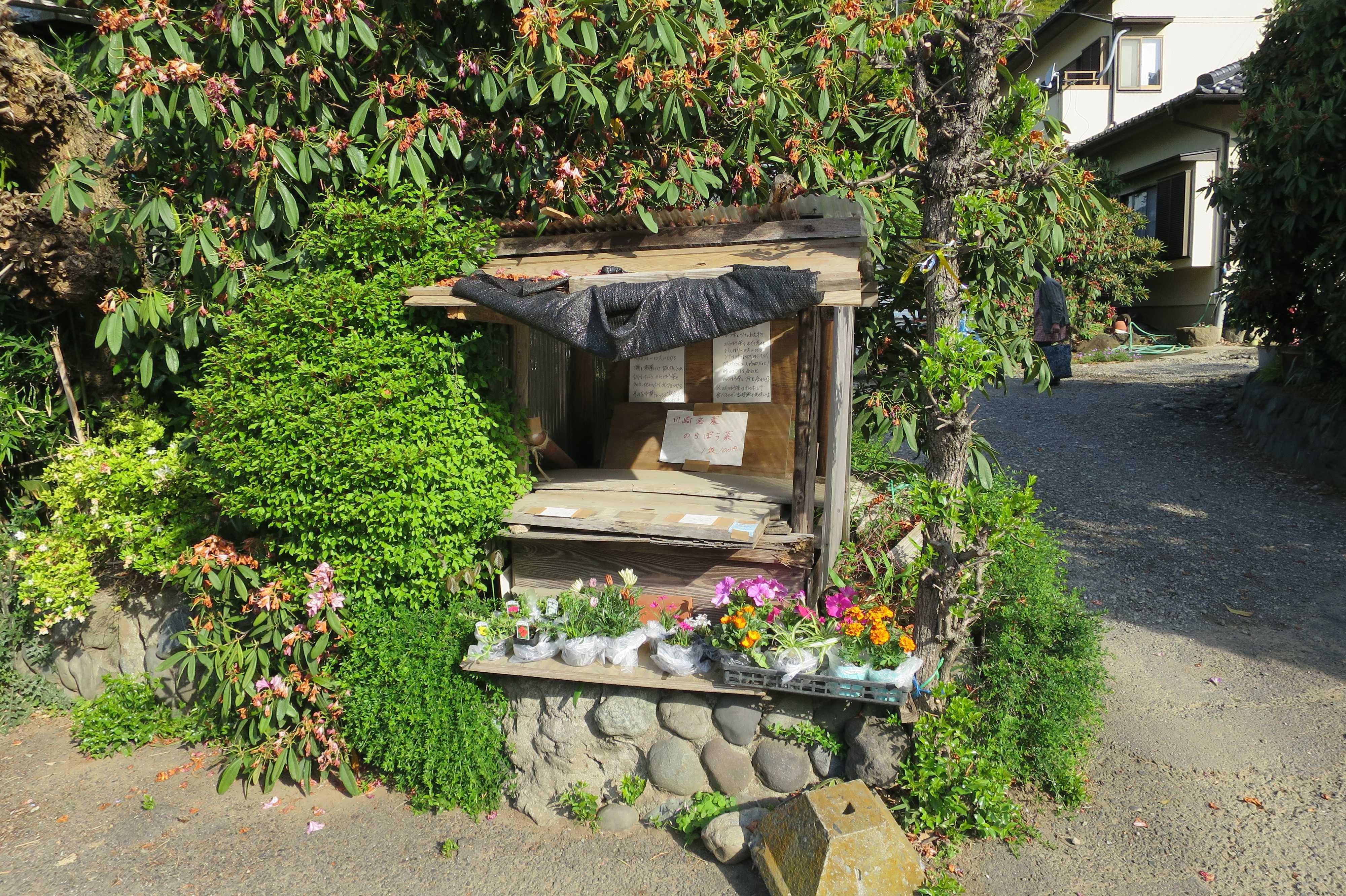 のらぼう菜の無人販売所 - 川崎市麻生区