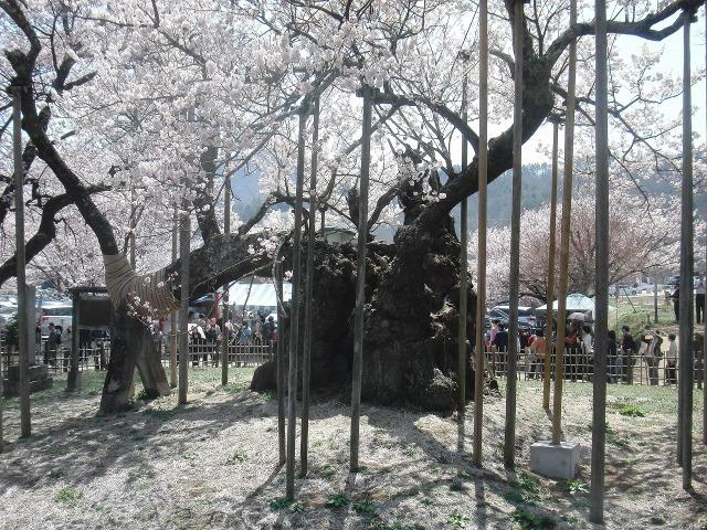 山高神代桜の支え棒