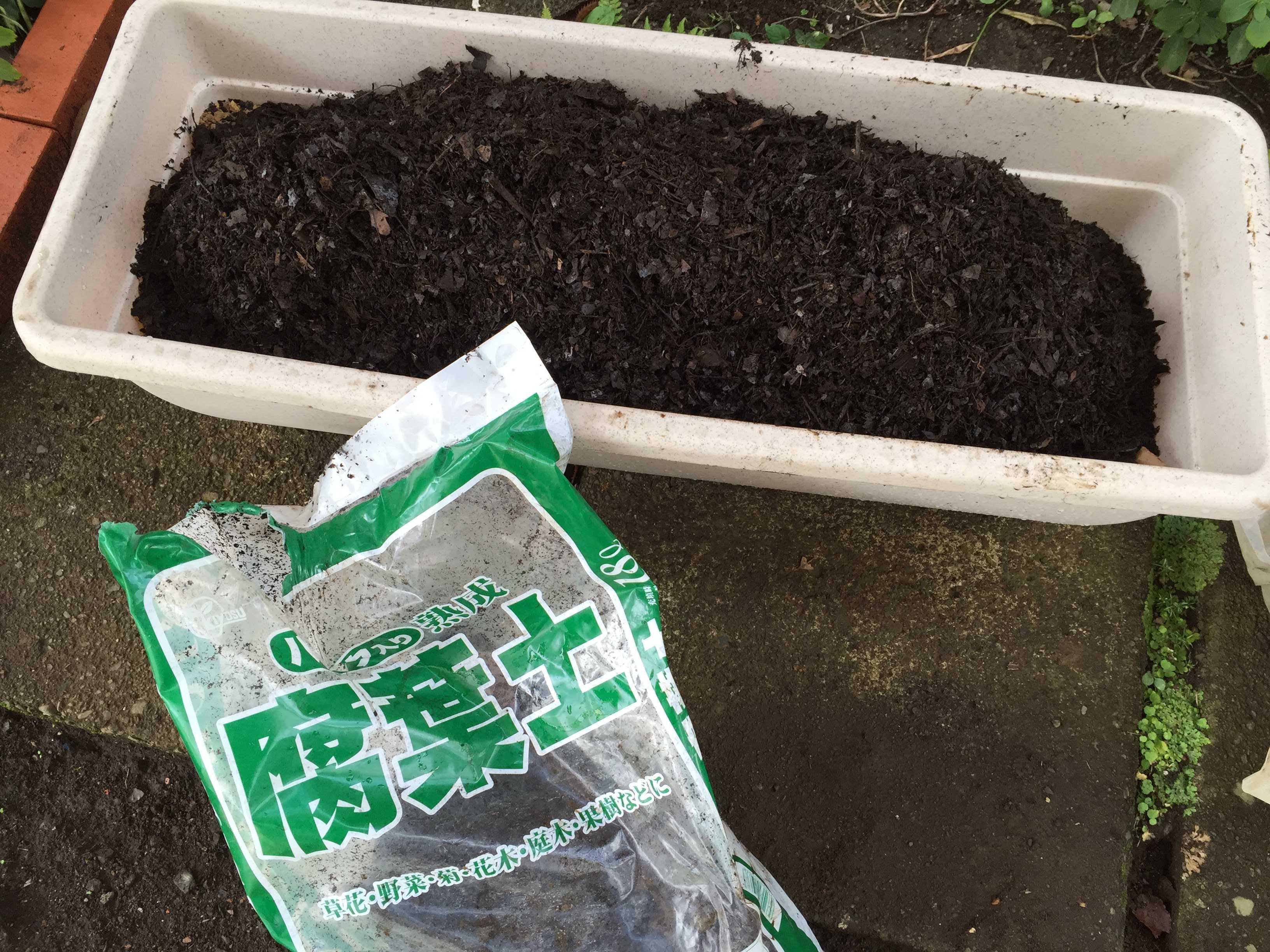ヤマユリの種子繁殖/実生 - 腐葉土