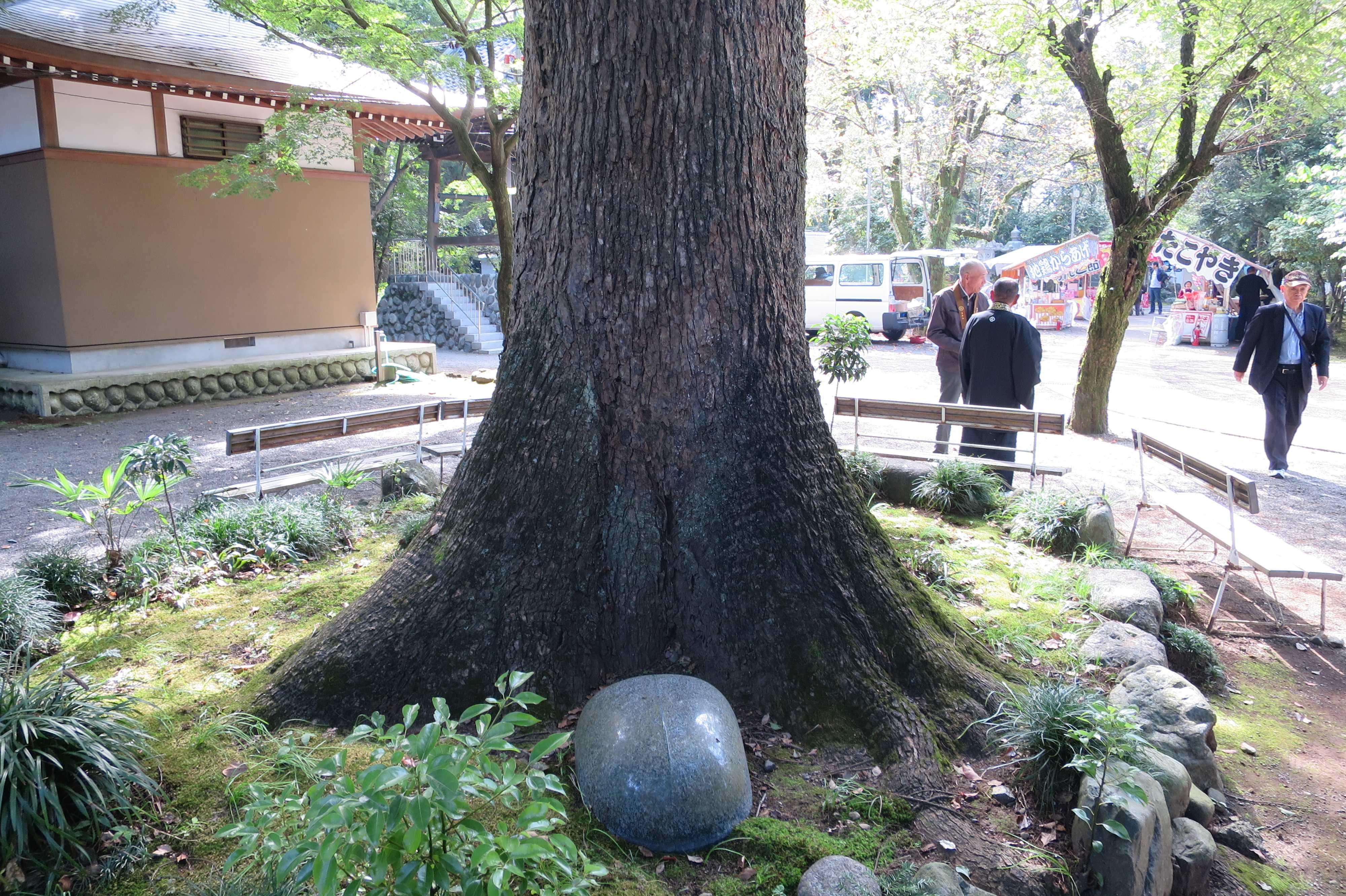 無量光寺 - 大樹の根元
