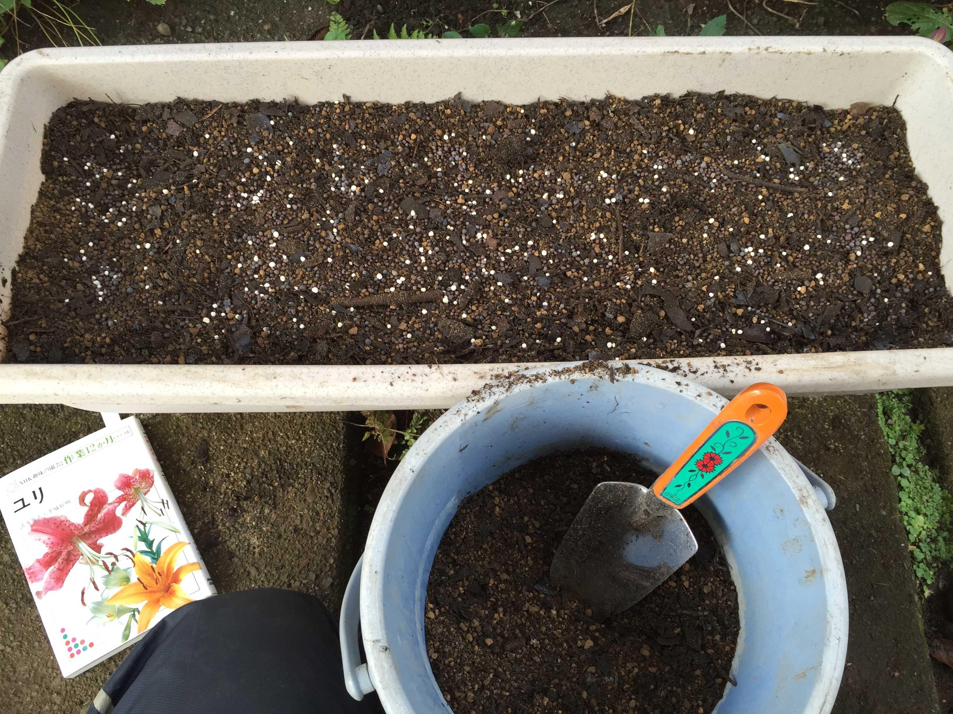 ヤマユリの種子繁殖/実生 - 住友化学園芸 マイガーデン 植物全般用
