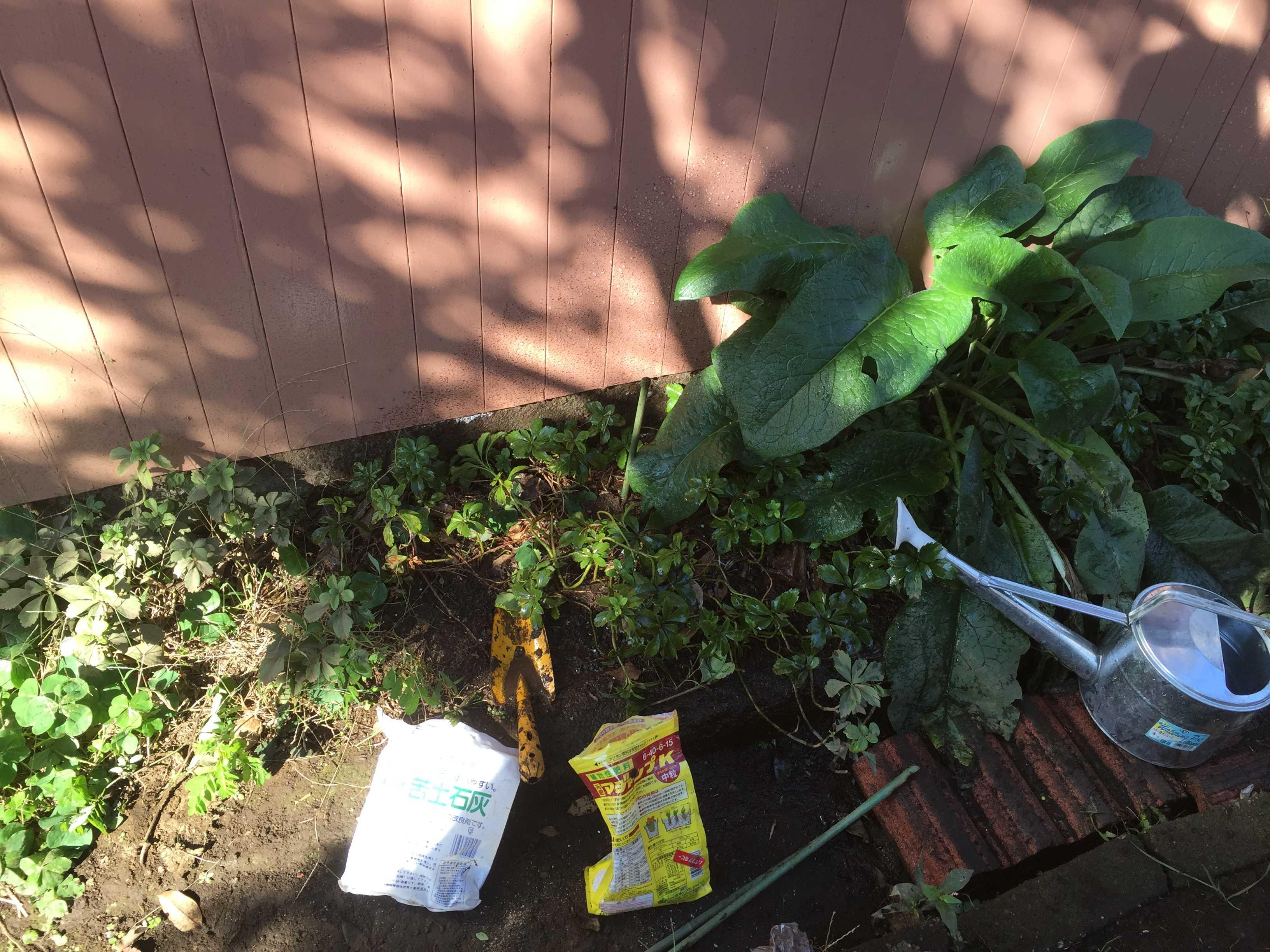 木漏れ日があたる場所 - やまゆりの球根の植え付け