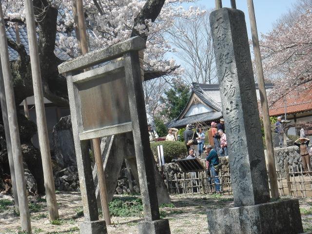 天然記念物山高神代櫻