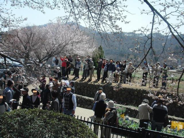 観桜する人々 - 山高神代桜