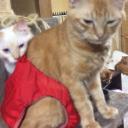 ブログ「茶猫と白猫との生活50匹編」