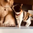 ブログ「Ciel & Louna  成長日記」