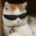ブログ「窓の外から猫の声🐈🐈🐈」