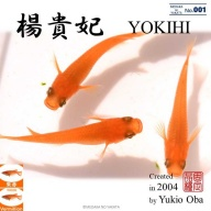 Characteristics of YOKIHI ~ Introduction of improved medaka varieties~ 楊貴妃の特徴 ~改良メダカの品種紹介~