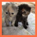 ブログ「ペルシャ子猫と魔法の田舎暮らし!」