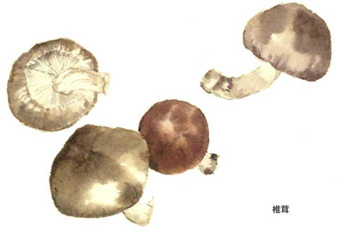 椎茸,水彩画,イラスト,食材,素材
