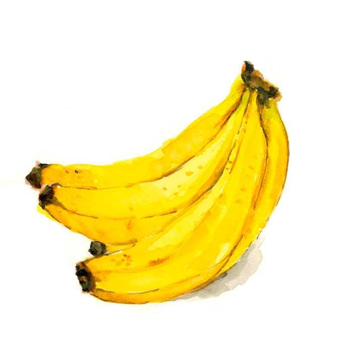 バナナ,果物,フルーツ,水彩画,イラスト,素材,食材