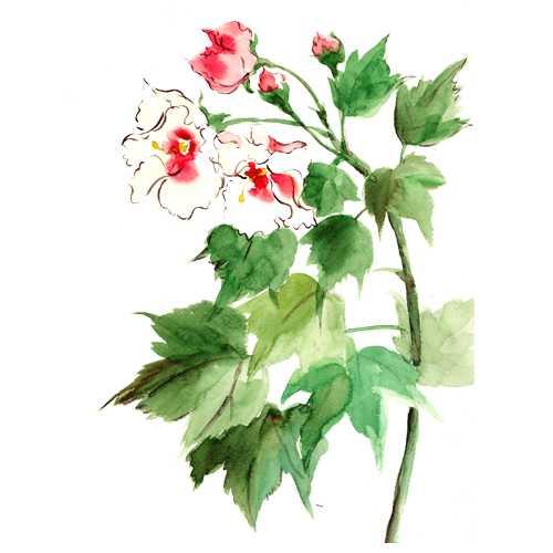酸芙蓉,すいふよう,花,秋,水彩画,イラスト