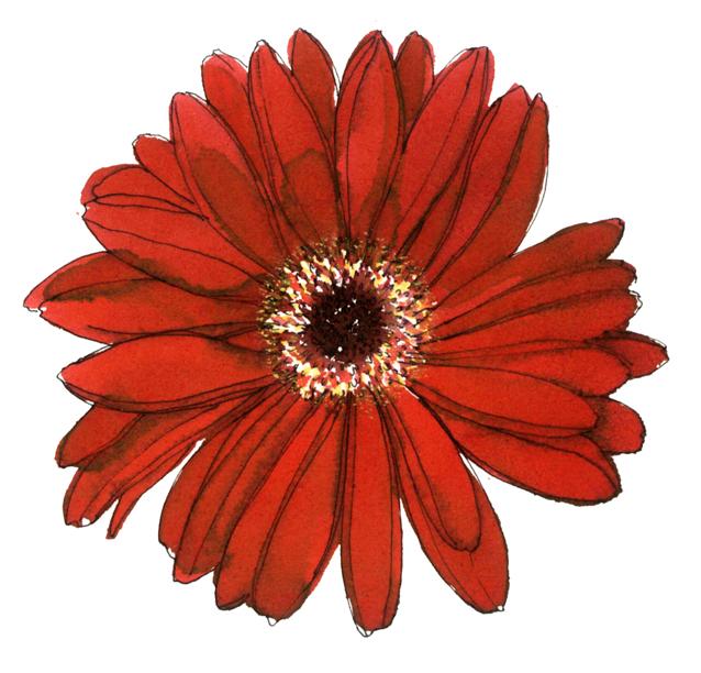 ガーベラ,花,春,植物,水彩画,イラスト,素材