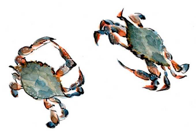 カニ,水彩画,イラスト,渡り蟹,食材,素材
