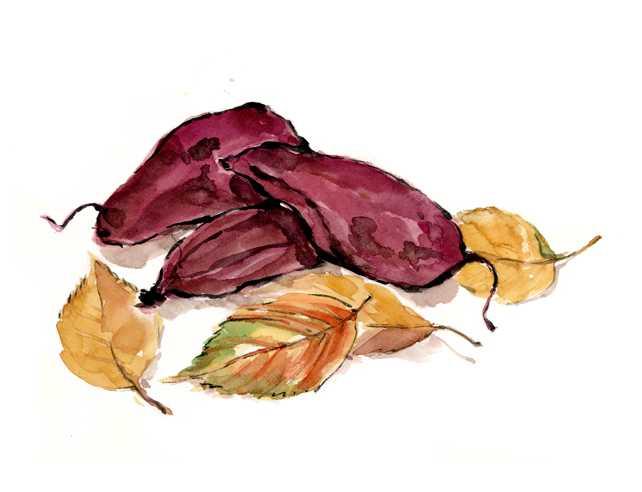 サツマイモ,秋,根菜,高塚由子,Yoshiko,Taaktsuka,水彩画,Watercolor,イラスト,素材