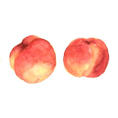 桃,果物,フルーツ,水彩画,イラスト,素材,食材
