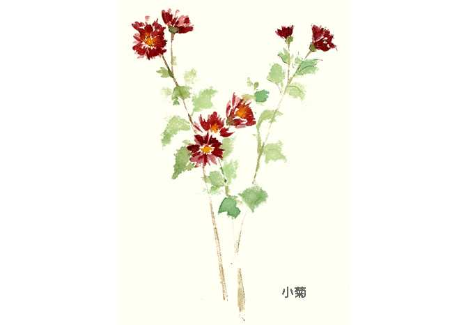 菊,水彩画,花,植物,秋,素材
