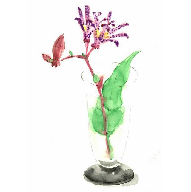 ホトトギス,花,高塚由子,Yoshiko,Taaktsuka,水彩画,Watercolor,イラスト,素材