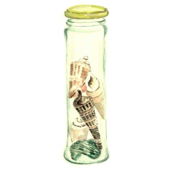 貝,巻貝,瓶,水彩画,イラスト,素材