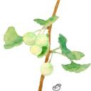 クイズ 七第弾 何の実 Vol 237 高塚由子の水彩画 魔法の筆