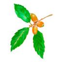 七十二候 蟋蟀在戸 秋桜 コスモス 高塚由子の水彩画 魔法の筆
