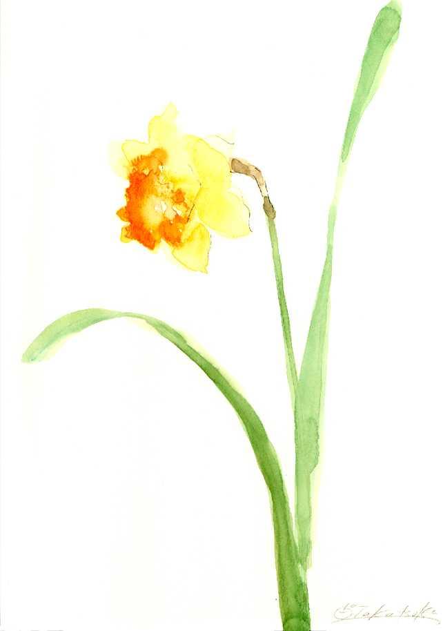 水仙,水彩画,イラスト,花,植物,素材