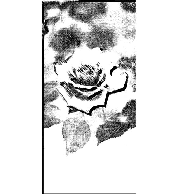 バラ,白,花,高塚由子,Yoshiko,Taaktsuka,イラスト